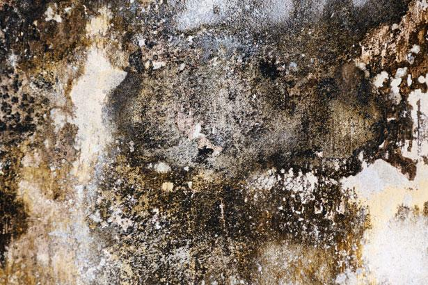 the dangers of mold exposure in your home or office - Exposure To Black Mold